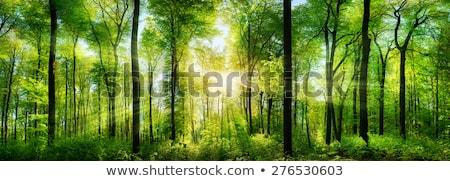 paisagem · verde · floresta · sol · céu - foto stock © OleksandrO