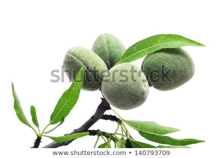 branche · amande · arbre · vert - photo stock © nito