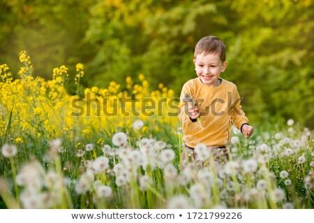 Stock fotó: Kicsi · fiú · legelő · pitypang · égbolt · fű