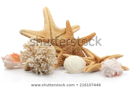 Starfish, mussel and seashells isolated  stock photo © jordanrusev