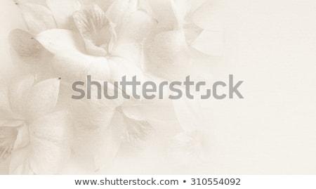 Purple mulberry paper background Stock photo © Kheat