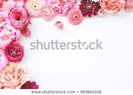 цветок розовый георгин текстуры саду фон Сток-фото © Paha_L