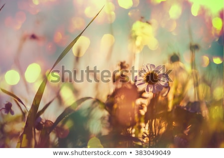 Stock photo: Flowers in the mountains on a sunny day