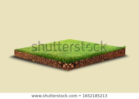 yeşil · toprak · izometrik · görmek · çim · ahşap - stok fotoğraf © teerawit