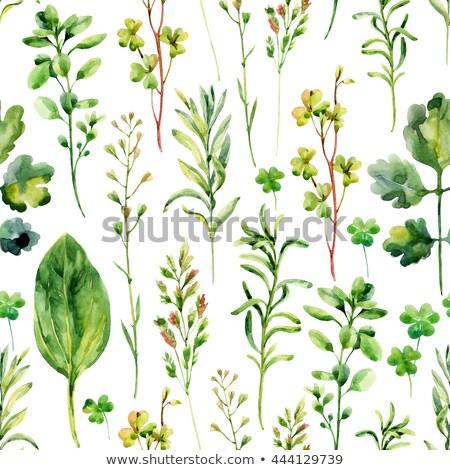 couleur · pour · aquarelle · dessin · fleur · laisse · coloré · médecine - photo stock © artibelka