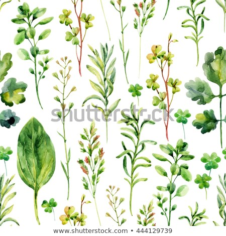 watercolor drawing of plantain stock photo © artibelka