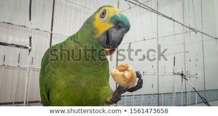 Papuga klatki zielone falisty tle ptaków Zdjęcia stock © manaemedia