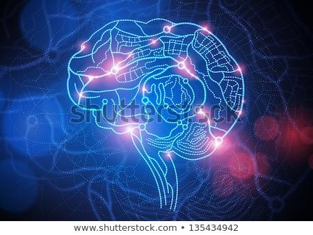 cerveau · direction · démence · routes · forme - photo stock © lightsource