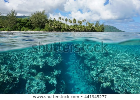 Tropical island landscape from ocean water surface Stock photo © cienpies