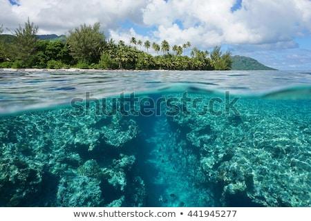 水面 · 緑色の葉 · 新しい · 生まれる · 詳細 · 水 - ストックフォト © cienpies