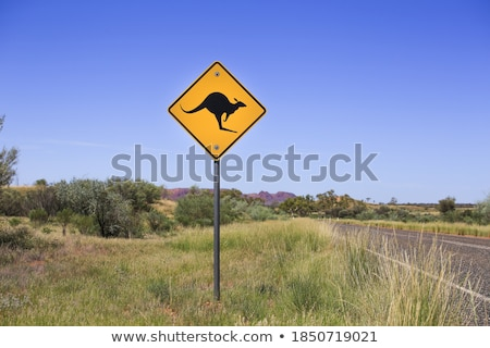 canguru · país · árvore · grama · estrada - foto stock © adrenalina