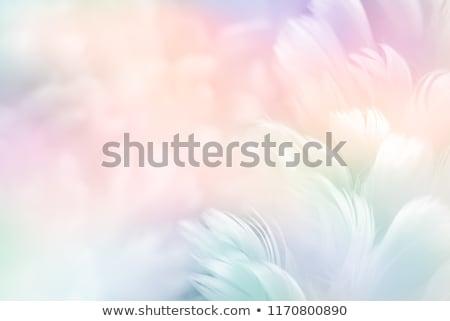 Pelucheux Rainbow ailes blanche cheveux art Photo stock © blackmoon979