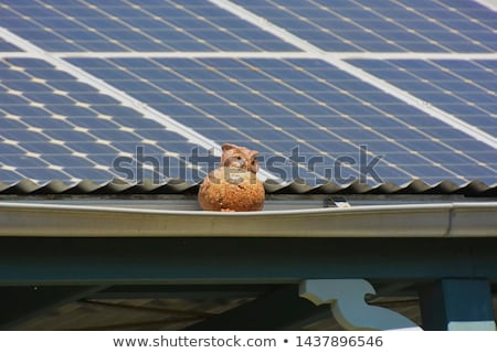 Uilen zonnepanelen illustratie zon elektriciteit cartoon Stockfoto © adrenalina