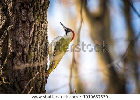 Yeşil arama doğa kuş tüy hayvan Stok fotoğraf © Rosemarie_Kappler