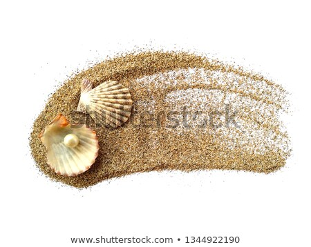 Open seashell scallop and pearl shell Stock photo © Zhukow