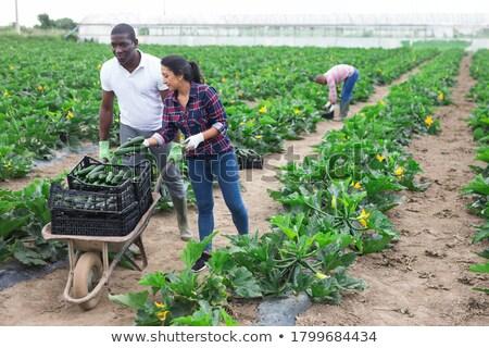 Vrouw voortvarend kruiwagen plant afrikaanse tuinman Stockfoto © RAStudio