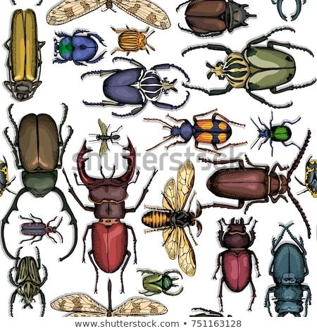 Kleurrijk insect bug vintage patroon Stockfoto © studioworkstock
