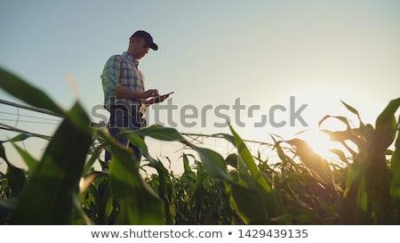 Adam çiftçi üretmek örnek hasır şapka Stok fotoğraf © lenm