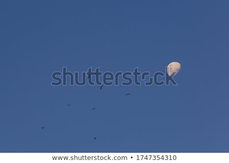 Moon Waxing Landscape with Copy Space Stock photo © suerob