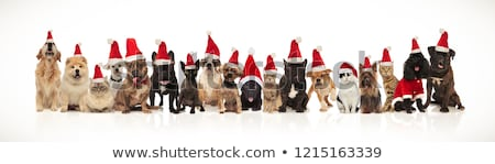 Stock photo: large group of adorable cats and dogs with santa hats