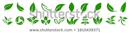 エコ 緑色の葉 にログイン ベクトル バイオ シンボル ストックフォト © blaskorizov