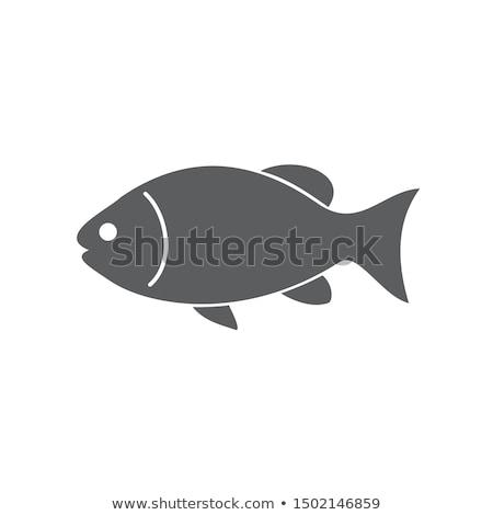 аквариум · рыбы · изолированный · белый · графических · пресноводный - Сток-фото © robuart