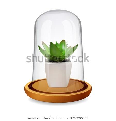 Сток-фото: Shell Pot Plant Illustration