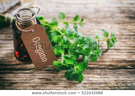 A bottle of oregano essential oil with fresh oregano twigs Stock photo © madeleine_steinbach