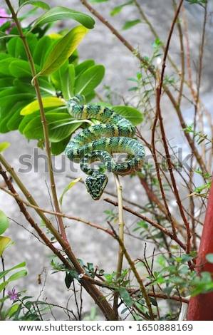 Serpent branche temple Malaisie forêt nature Photo stock © galitskaya