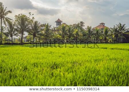 Rizsföld szív falu házak Bali égbolt Stock fotó © galitskaya