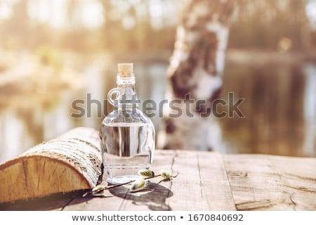 Huş ağacı ağaç içmek yaprakları beyaz ahşap Stok fotoğraf © AGfoto