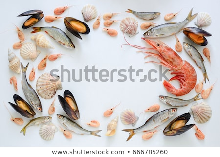 Set of fresh seafood Stock photo © olira