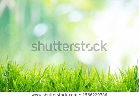 shiny background with green grass stock photo © adamson