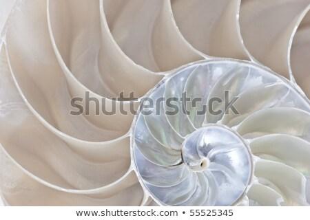 Mar conchas completo playa verano Foto stock © saje
