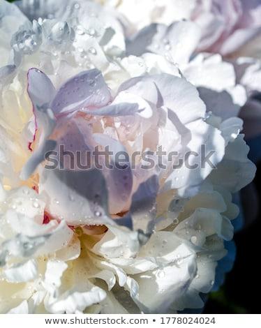 fleur · fond · été · cadeau · usine · carte - photo stock © wjarek