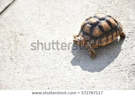 Teknős természet nap zöld állat föld Stock fotó © Pilgrimego