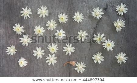 Fleur sous-continent indien star blanche cerise jaune Photo stock © bdspn