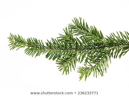 branch of Christmas tree with cones isolated on white Stock photo © tetkoren