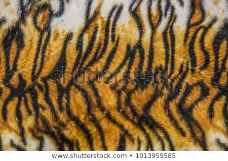 detail of real tiger fur Stock photo © taviphoto