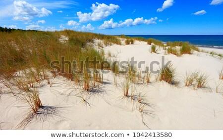 Füves dűne Balti-tenger fű háttér óceán Stock fotó © fotoaloja