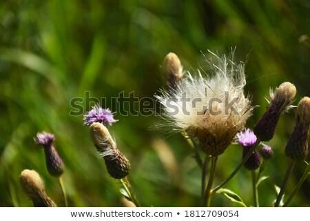 çiçek gülen küçük erkek teklif sarı çiçek Stok fotoğraf © hyrons