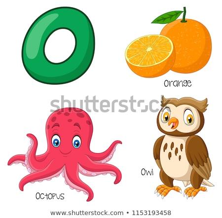 o for octopus stock photo © lenm