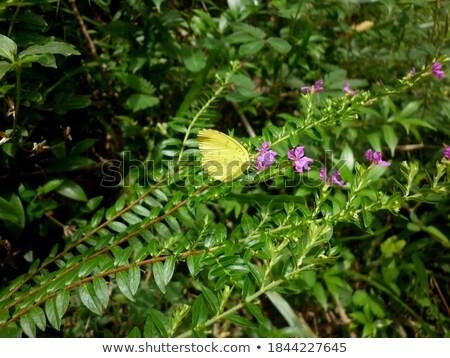 Small pink moth on flower of grass Stock photo © Yongkiet