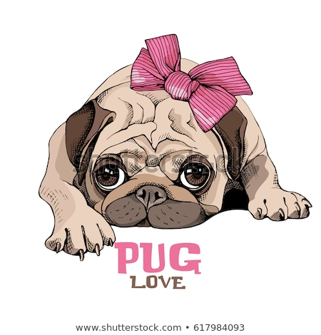 Dog pug head vector  Stock photo © Hermione