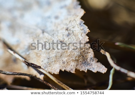 лист старые осень древесины саду деревья Сток-фото © jazza