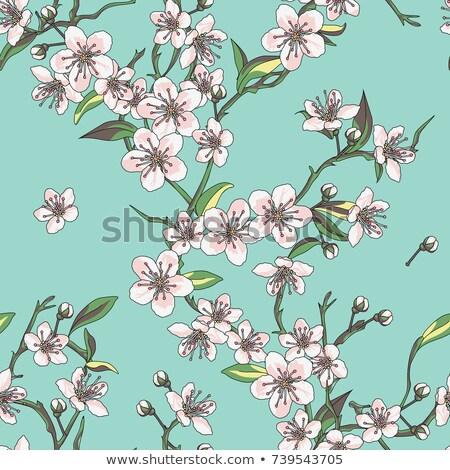 Stock photo: Cherry blossom all over