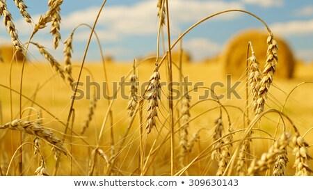 Foin nature paysage beauté montagne Photo stock © OleksandrO
