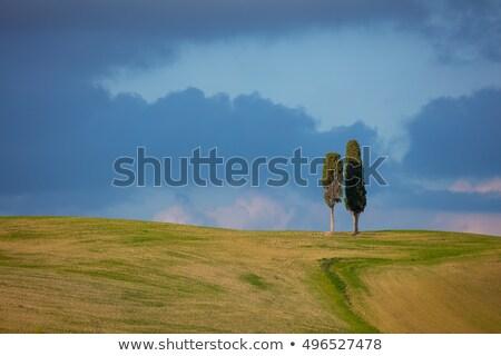 Iki Toskana ağaçlar mavi gökyüzü bulutlar minimalist Stok fotoğraf © Taiga