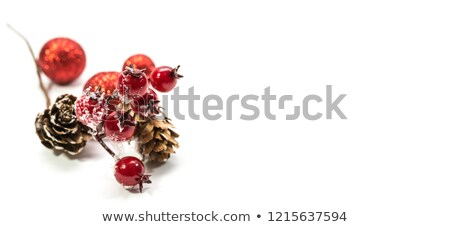 Red frozen rosehip stock photo © ondrej83