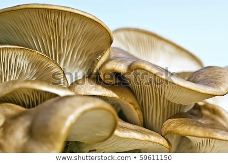 close-up mushrooms in woods Stock photo © glorcza